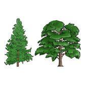 Hardwood & Softwood Lumber